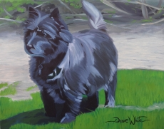 """""""dog painting"""", """"dave white painting"""", """"pet painting"""", """"dog portrait"""", """"pet portrait"""", """"cairn terrier painting"""""""
