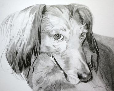 dog portrait, dog drawing, custom art, Dachshund