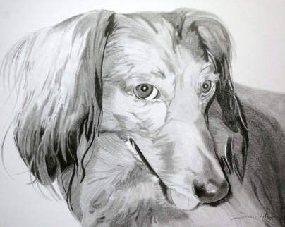 dog portrait, dog drawing, custom art, Dachshund