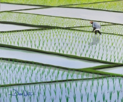 """rice paddy painting"", ""dave white paintings"", ""asian painting"", ""rice field painting"", ""asia painting"""