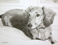 dog portrait, dog portrait drawing, artist dave white, pet portrait art