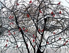 cardinal art, cardinal painting, red cardinal, red cardinals, cardinal, cardinals, red bird, red bird painting, cardinals painting