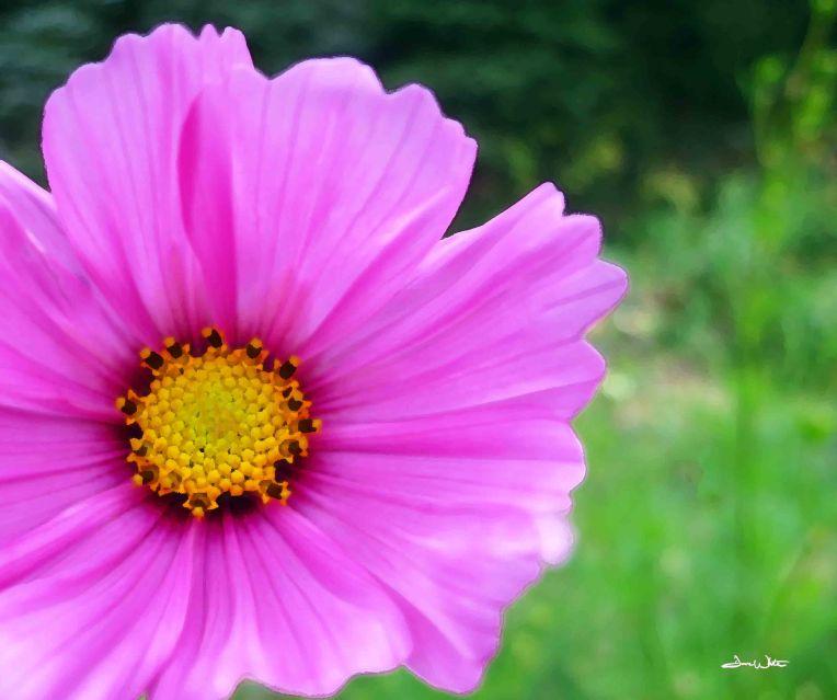 pink flower, flower art, flower photography, floral art, floral photography