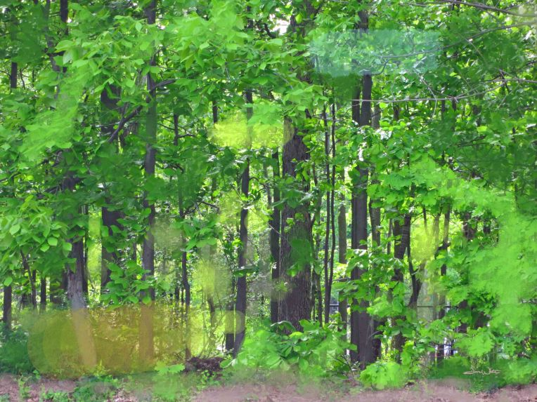 forest photo, forest photography, forest art, fine art photography, green forest, spring forest, dave white artist, dave white photography, dave white art
