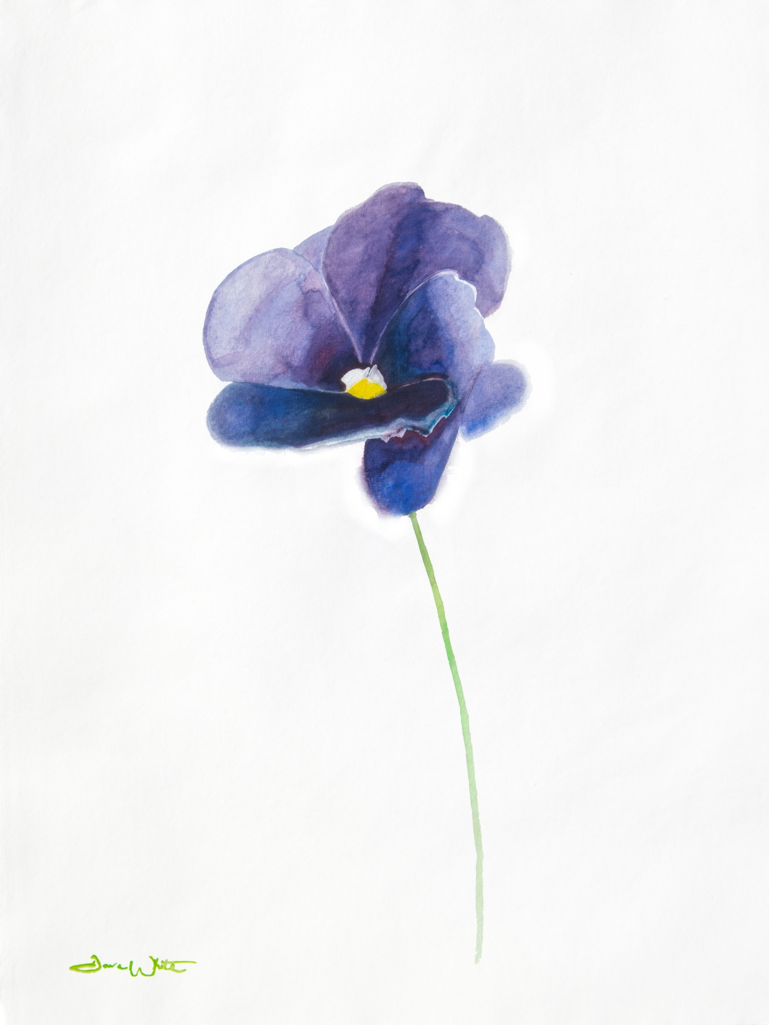 Series Of Watercolor Flower Paintings Artist Dave White