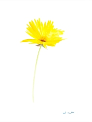 """""""yellow flower painting"""", """"floral art"""""""