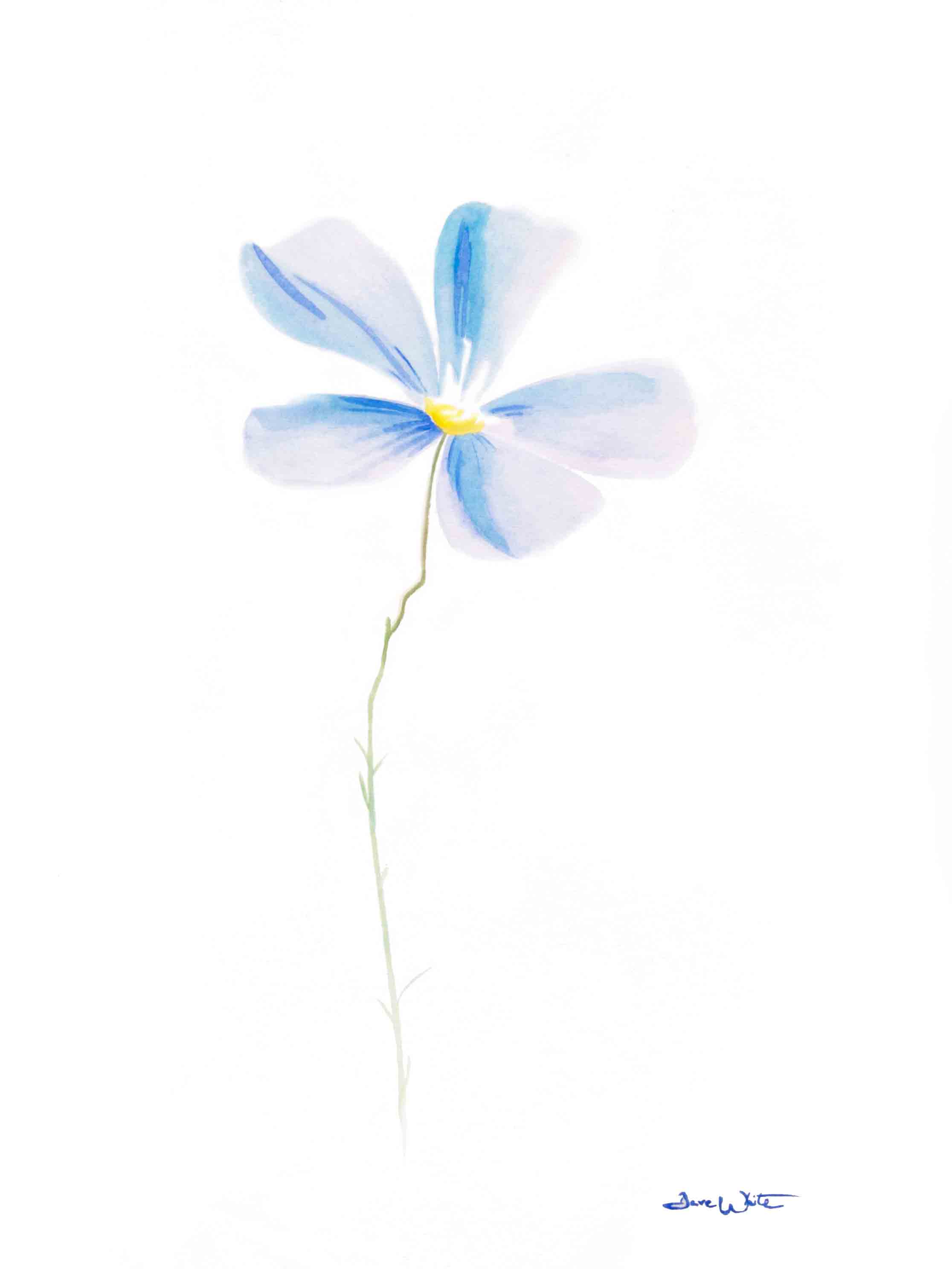 Blue Flower Watercolor Painting Artist Dave White Ashburn Va