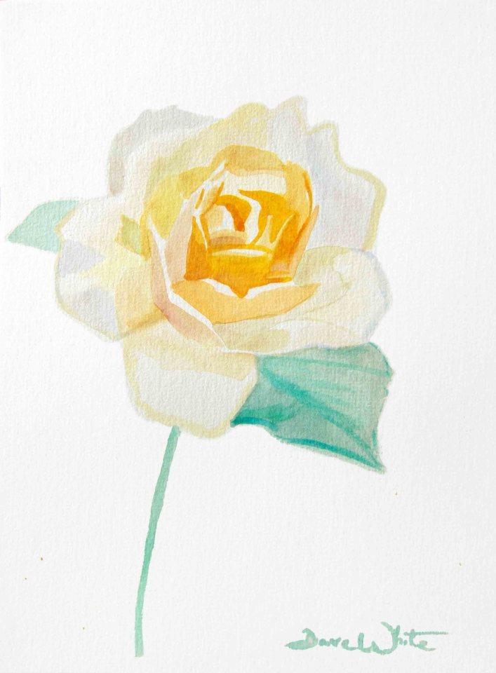 """""""orange rose painting"""", """"rose watercolor"""""""