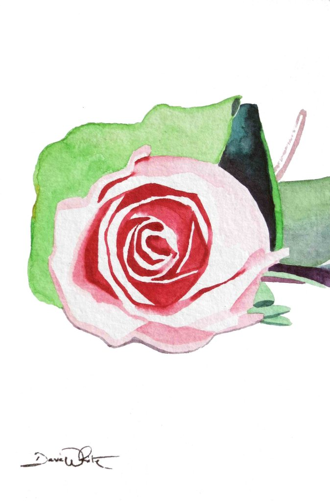"""rose watercolor painting"""